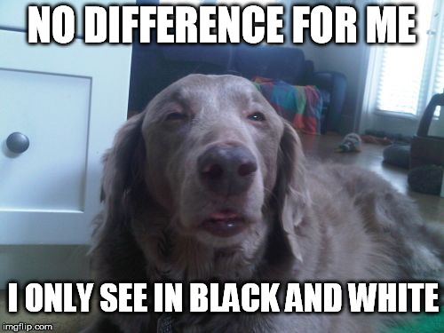 NO DIFFERENCE FOR ME I ONLY SEE IN BLACK AND WHITE | made w/ Imgflip meme maker