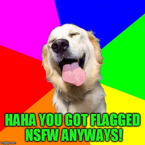 Anti Pun Dog | HAHA YOU GOT FLAGGED NSFW ANYWAYS! | image tagged in anti pun dog | made w/ Imgflip meme maker