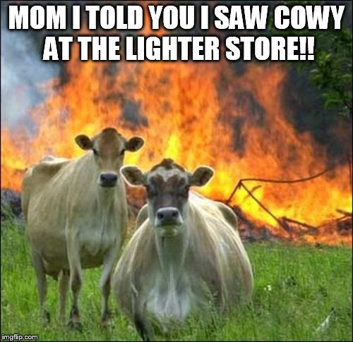 Evil Cows Meme | MOM I TOLD YOU I SAW COWY AT THE LIGHTER STORE!! | image tagged in memes,evil cows | made w/ Imgflip meme maker