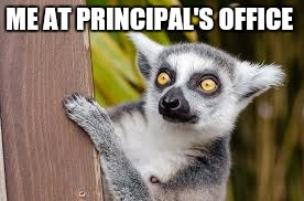 ME AT PRINCIPAL'S OFFICE | image tagged in lemur | made w/ Imgflip meme maker