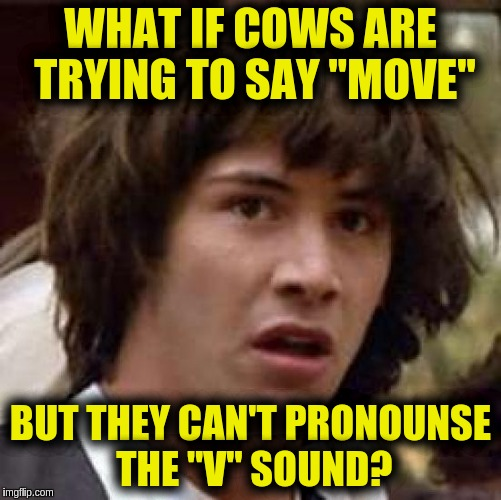 "Conspiracy Keanu Meme | WHAT IF COWS ARE TRYING TO SAY ""MOVE"" BUT THEY CAN'T PRONOUNSE THE ""V"" SOUND? 