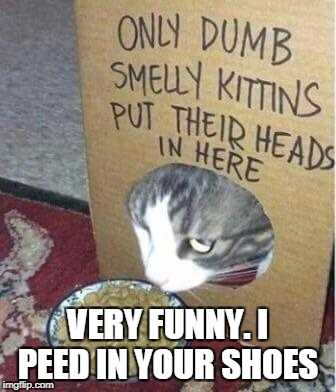 VERY FUNNY. I PEED IN YOUR SHOES | image tagged in dumb cats | made w/ Imgflip meme maker