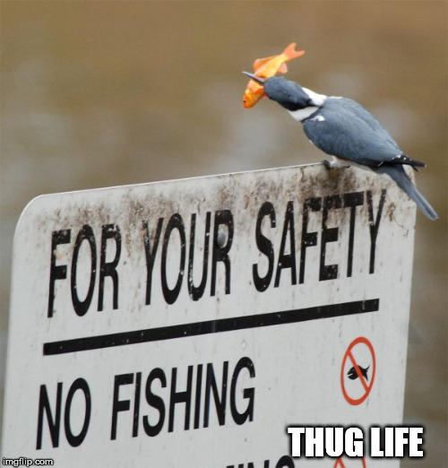 THUG LIFE | made w/ Imgflip meme maker