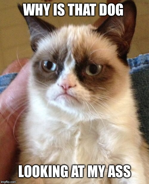 Grumpy Cat Meme | WHY IS THAT DOG LOOKING AT MY ASS | image tagged in memes,grumpy cat | made w/ Imgflip meme maker