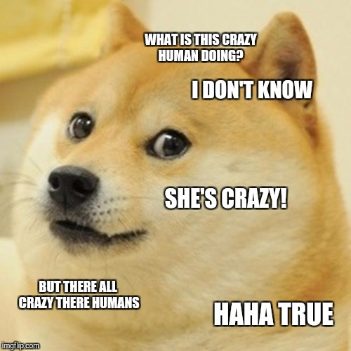 Doge Meme | WHAT IS THIS CRAZY HUMAN DOING? I DON'T KNOW SHE'S CRAZY! BUT THERE ALL CRAZY THERE HUMANS HAHA TRUE | image tagged in memes,doge | made w/ Imgflip meme maker