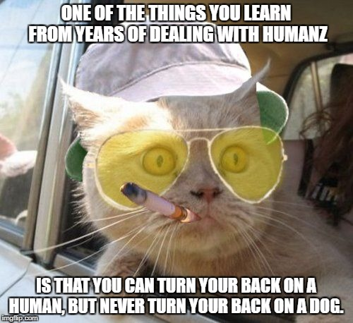 Catnip is a helluva drug.. | ONE OF THE THINGS YOU LEARN FROM YEARS OF DEALING WITH HUMANZ IS THAT YOU CAN TURN YOUR BACK ON A HUMAN, BUT NEVER TURN YOUR BACK ON A DOG. | image tagged in fear and loathing kitty,cat meme,cat vs dog meme,funny cat memes,crazy humanz meme | made w/ Imgflip meme maker