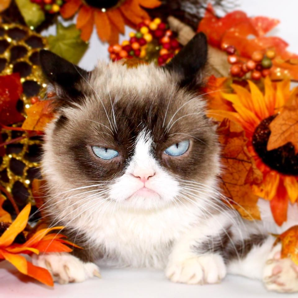 grumpy cat autumn blank template