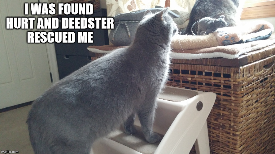I WAS FOUND HURT AND DEEDSTER RESCUED ME | made w/ Imgflip meme maker