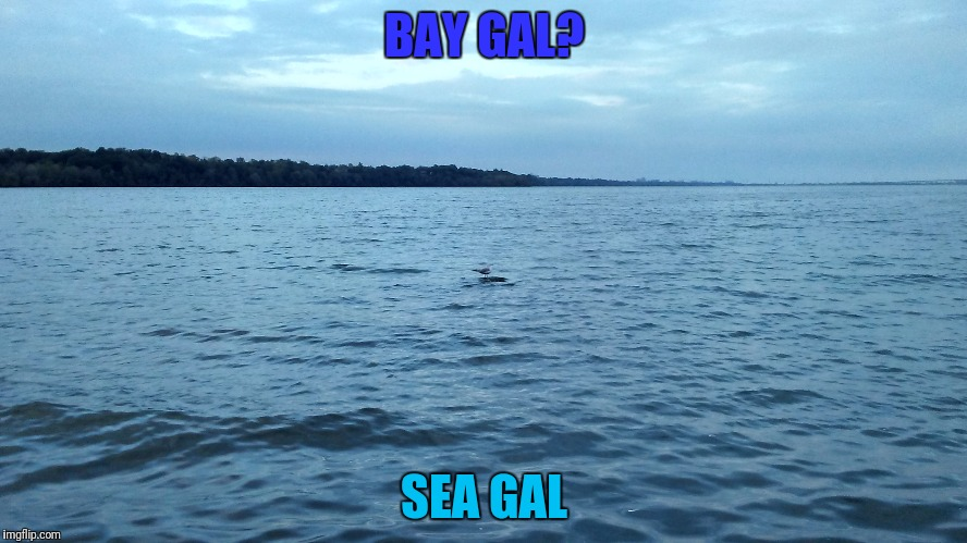 BAY GAL? SEA GAL | made w/ Imgflip meme maker