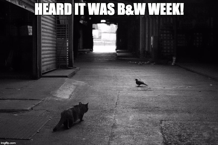 Heard it was B&W Week! | HEARD IT WAS B&W WEEK! | image tagged in cats,black and white | made w/ Imgflip meme maker