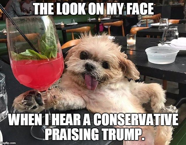 Praise Trump | THE LOOK ON MY FACE WHEN I HEAR A CONSERVATIVE PRAISING TRUMP. | image tagged in trump,donald trump is an idiot | made w/ Imgflip meme maker