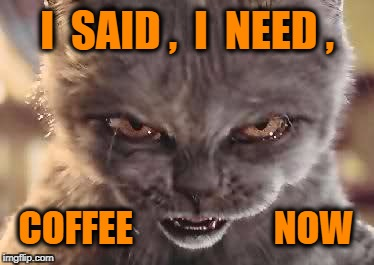 I  SAID ,  I  NEED , COFFEE                   NOW | image tagged in happy halloween cat memes | made w/ Imgflip meme maker