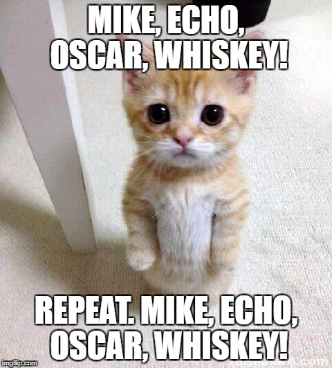 Cute Cat Meme | MIKE, ECHO, OSCAR, WHISKEY! REPEAT. MIKE, ECHO, OSCAR, WHISKEY! | image tagged in memes,cute cat | made w/ Imgflip meme maker