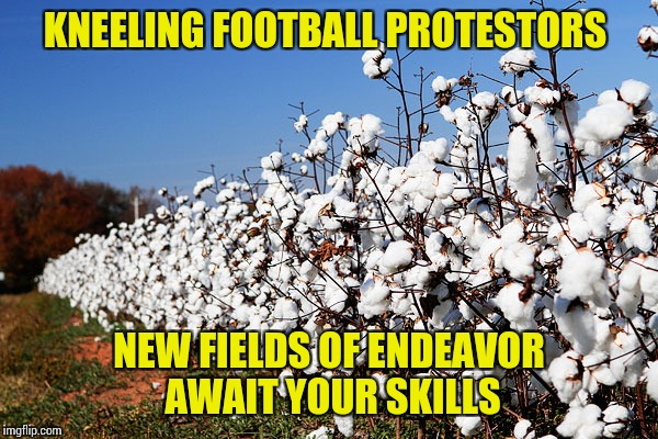 KNEELING FOOTBALL PROTESTORS NEW FIELDS OF ENDEAVOR AWAIT YOUR SKILLS | image tagged in cotton field | made w/ Imgflip meme maker