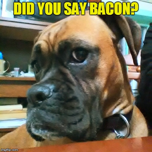 DID YOU SAY BACON? | made w/ Imgflip meme maker