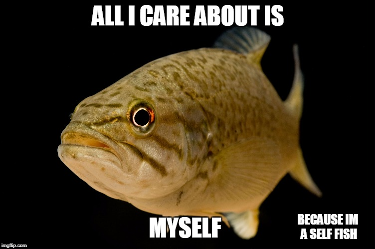 Fish | ALL I CARE ABOUT IS MYSELF BECAUSE IM A SELF FISH | image tagged in useless | made w/ Imgflip meme maker