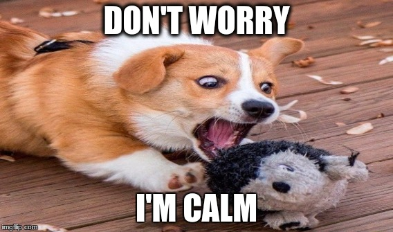 DON'T WORRY I'M CALM | image tagged in funny memes | made w/ Imgflip meme maker
