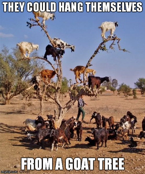 THEY COULD HANG THEMSELVES FROM A GOAT TREE | made w/ Imgflip meme maker