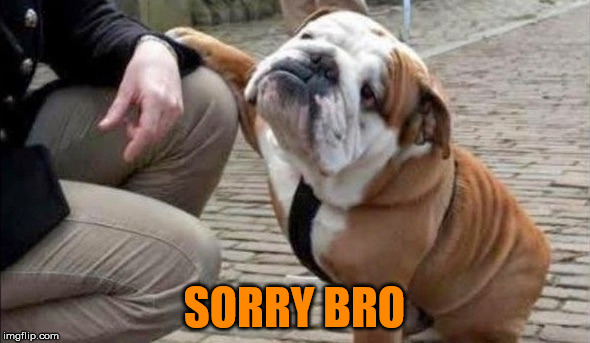 There There Dog | SORRY BRO | image tagged in there there dog | made w/ Imgflip meme maker