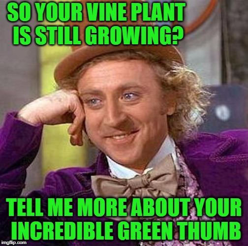 You certainly don't need to be a horticulturist to successfully grow a vine plant!  lol | SO YOUR VINE PLANT IS STILL GROWING? TELL ME MORE ABOUT YOUR INCREDIBLE GREEN THUMB | image tagged in memes,creepy condescending wonka | made w/ Imgflip meme maker