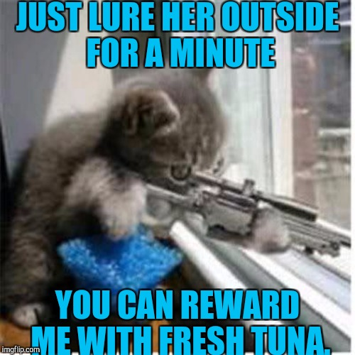JUST LURE HER OUTSIDE FOR A MINUTE YOU CAN REWARD ME WITH FRESH TUNA. | made w/ Imgflip meme maker