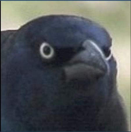 angry crow Blank Template - Imgflip