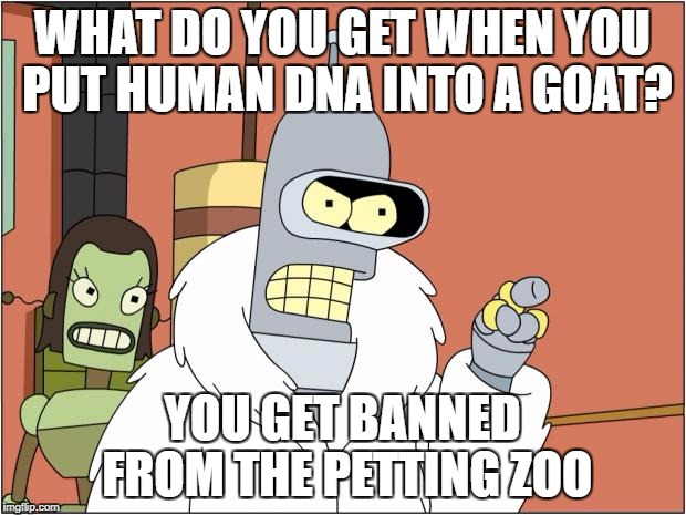 Bender Meme | WHAT DO YOU GET WHEN YOU PUT HUMAN DNA INTO A GOAT? YOU GET BANNED FROM THE PETTING ZOO | image tagged in memes,bender | made w/ Imgflip meme maker