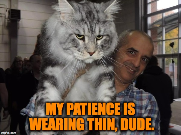 Maine Coon Cat Thoughts (actually, they're very mellow, but the expression! lol) | MY PATIENCE IS WEARING THIN, DUDE. | image tagged in patience | made w/ Imgflip meme maker