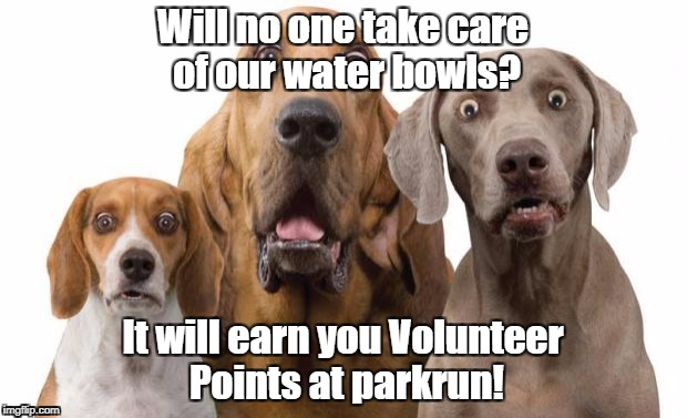 Dogs Surprised | Will no one take care of our water bowls? It will earn you Volunteer Points at parkrun! | image tagged in parkrun,dogs water,volunteer | made w/ Imgflip meme maker
