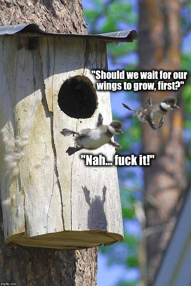 "Flying the Nest | ""Should we wait for our wings to grow, first?"" ""Nah... f**k it!"" 
