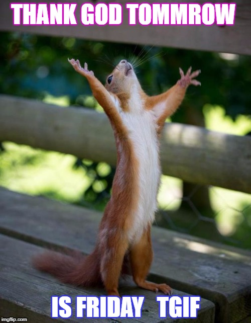 friday_squirrel | THANK GOD TOMMROW IS FRIDAY   TGIF | image tagged in friday_squirrel | made w/ Imgflip meme maker