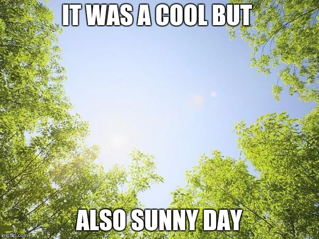 sunshine trees | IT WAS A COOL BUT ALSO SUNNY DAY | image tagged in sunshine trees | made w/ Imgflip meme maker