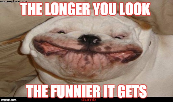 THE LONGER YOU LOOK THE FUNNIER IT GETS | image tagged in doge | made w/ Imgflip meme maker