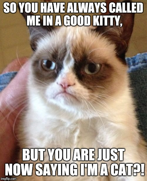 Grumpy Cat Meme | SO YOU HAVE ALWAYS CALLED ME IN A GOOD KITTY, BUT YOU ARE JUST NOW SAYING I'M A CAT?! | image tagged in memes,grumpy cat | made w/ Imgflip meme maker