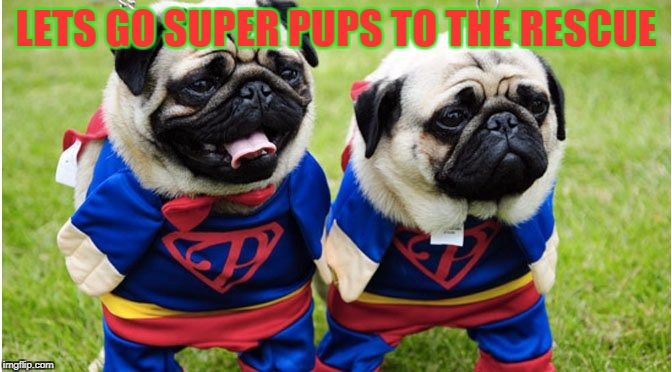 LETS GO SUPER PUPS TO THE RESCUE | image tagged in dogs | made w/ Imgflip meme maker