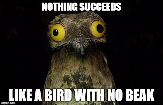 Weird Stuff I Do Potoo Meme | NOTHING SUCCEEDS LIKE A BIRD WITH NO BEAK | image tagged in memes,weird stuff i do potoo | made w/ Imgflip meme maker