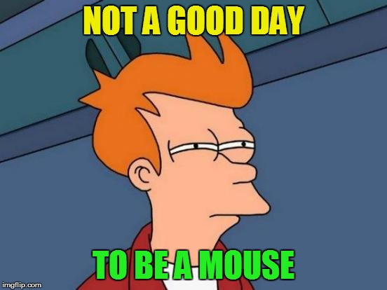 Futurama Fry Meme | NOT A GOOD DAY TO BE A MOUSE | image tagged in memes,futurama fry | made w/ Imgflip meme maker
