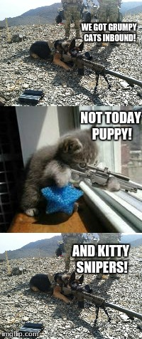 Cats inbound! | NOT TODAY PUPPY! WE GOT GRUMPY CATS INBOUND! AND KITTY SNIPERS! | image tagged in memes,funny,animals,dog with gun,kitty with sniper rifle,military | made w/ Imgflip meme maker