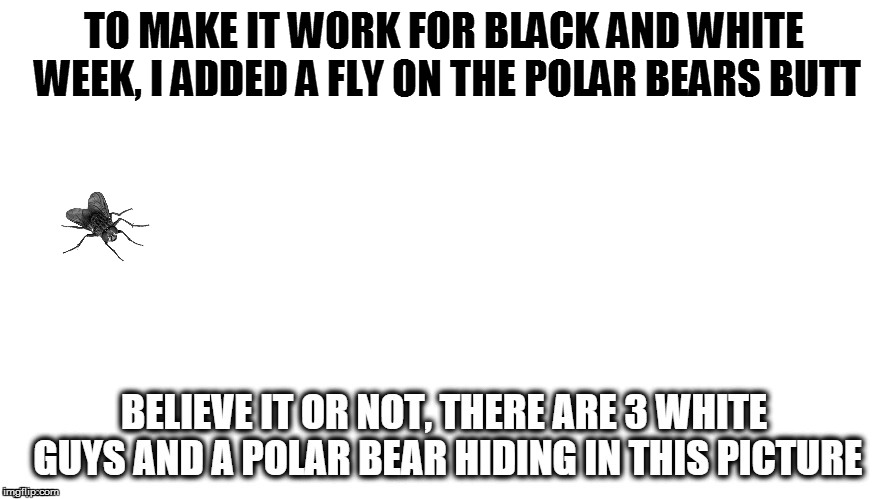 TO MAKE IT WORK FOR BLACK AND WHITE WEEK, I ADDED A FLY ON THE POLAR BEARS BUTT | made w/ Imgflip meme maker