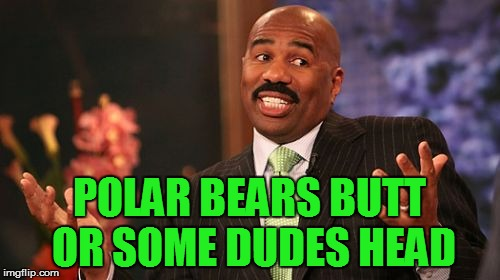Steve Harvey Meme | POLAR BEARS BUTT OR SOME DUDES HEAD | image tagged in memes,steve harvey | made w/ Imgflip meme maker
