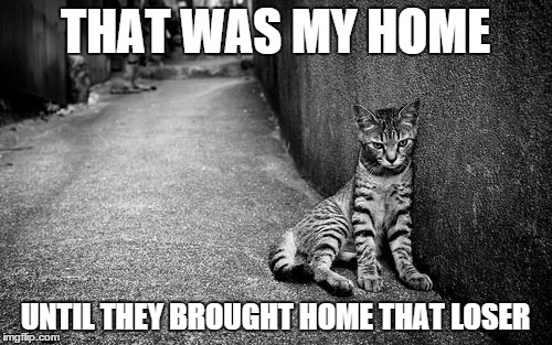 THAT WAS MY HOME UNTIL THEY BROUGHT HOME THAT LOSER | made w/ Imgflip meme maker