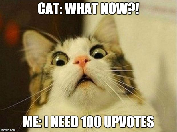 Scared Cat Meme | CAT: WHAT NOW?! ME: I NEED 100 UPVOTES | image tagged in memes,scared cat | made w/ Imgflip meme maker