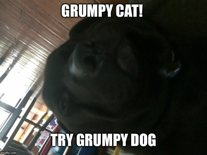 image tagged in funny,grumpy dog | made w/ Imgflip meme maker