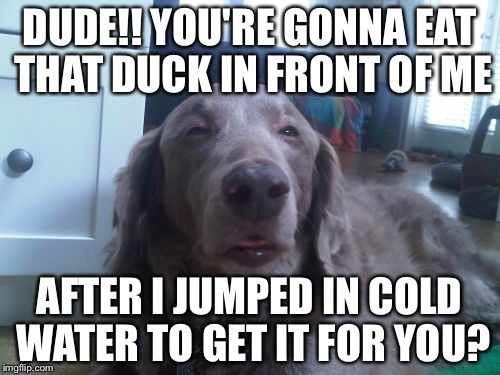 High Dog Meme | DUDE!! YOU'RE GONNA EAT THAT DUCK IN FRONT OF ME AFTER I JUMPED IN COLD WATER TO GET IT FOR YOU? | image tagged in memes,high dog | made w/ Imgflip meme maker