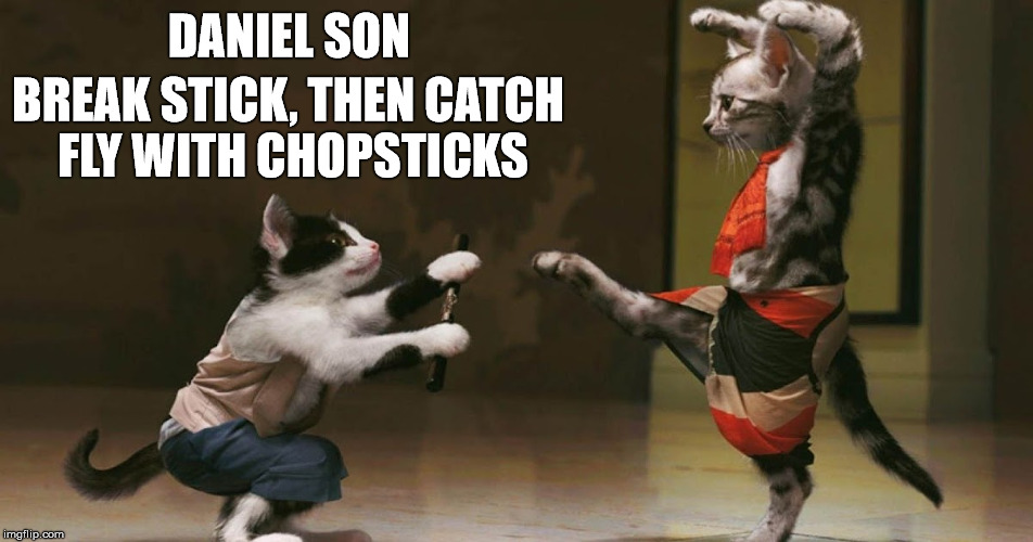 Karate Cat | DANIEL SON BREAK STICK, THEN CATCH FLY WITH CHOPSTICKS | image tagged in cats,karate kid,memes,mr miyagi | made w/ Imgflip meme maker