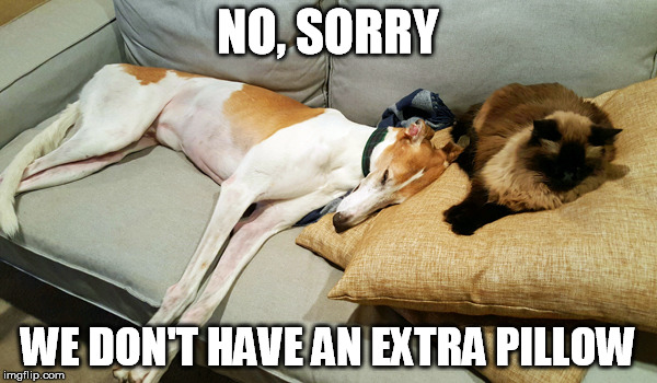 NO, SORRY WE DON'T HAVE AN EXTRA PILLOW | made w/ Imgflip meme maker
