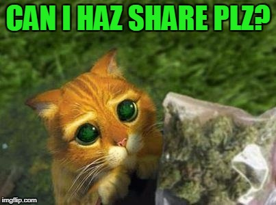 CAN I HAZ SHARE PLZ? | made w/ Imgflip meme maker