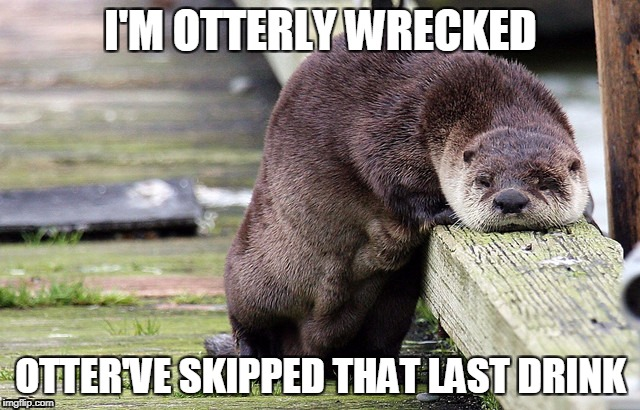 I'M OTTERLY WRECKED OTTER'VE SKIPPED THAT LAST DRINK | image tagged in otter,drinking,otter pun,bad pun,funny animal | made w/ Imgflip meme maker