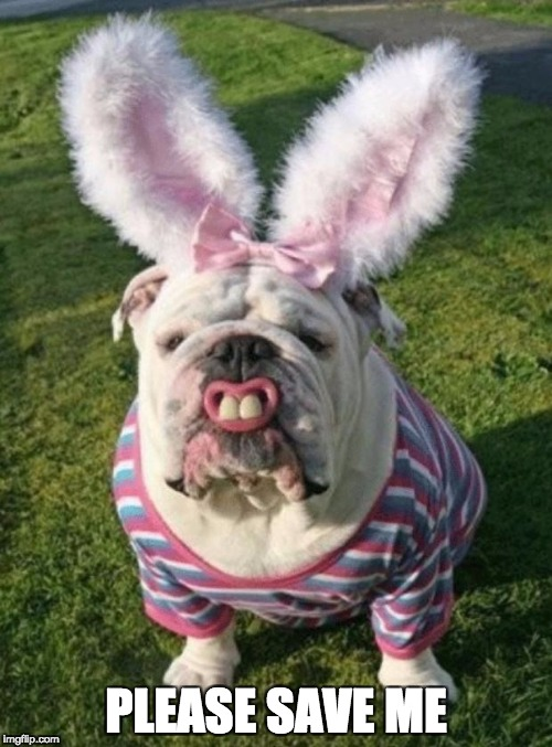 Best Bulldog Bunny | PLEASE SAVE ME | image tagged in best bulldog bunny | made w/ Imgflip meme maker