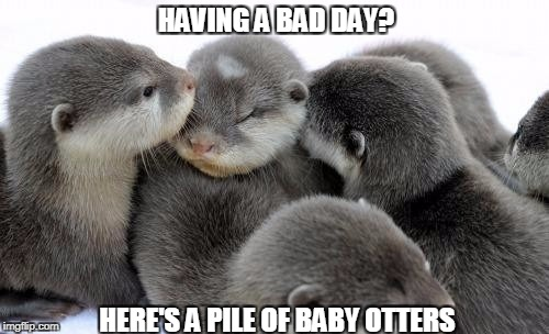 HAVING A BAD DAY? HERE'S A PILE OF BABY OTTERS | image tagged in pile of otters,memes,cute,having a bad day,baby animals,cheer up | made w/ Imgflip meme maker